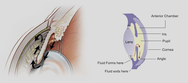 Fig. 1The flow of the intraocular fluid